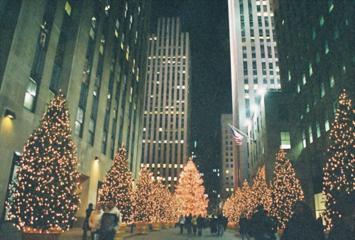 christmas, christmas trees, city, trees