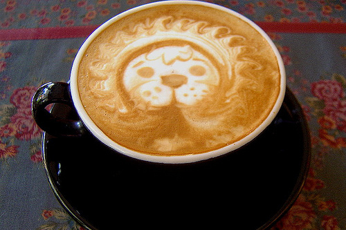 coffee, cool, design, lion, photography, pretty