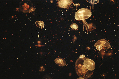 cool, cute, jelly fish, jellyfish, lights