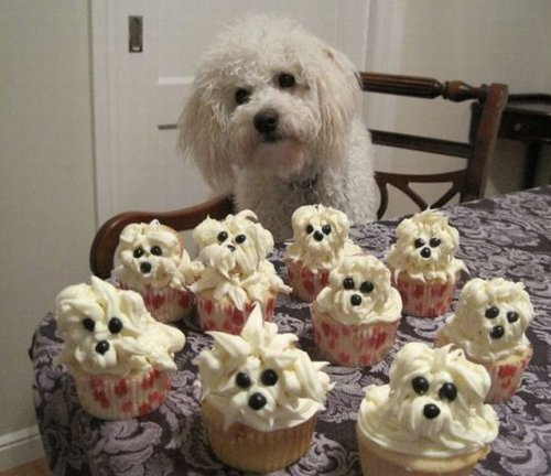 cupcake, cupcakes, cute, dog, dogs, haha, lol, photography, sweet, white