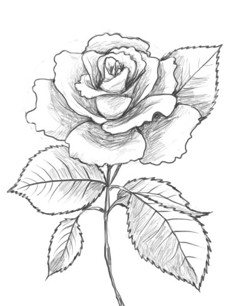 Rose Bouquet Drawing Cute Drawings Love Rose