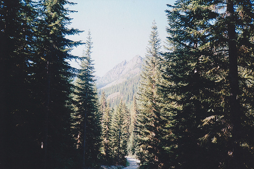 forest, hill, mountain, nature, trees