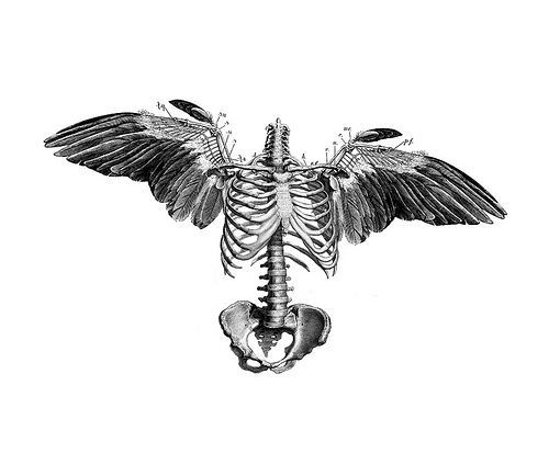 illustration, skull, wings