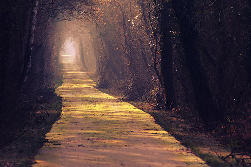 nature, photography, road, trees