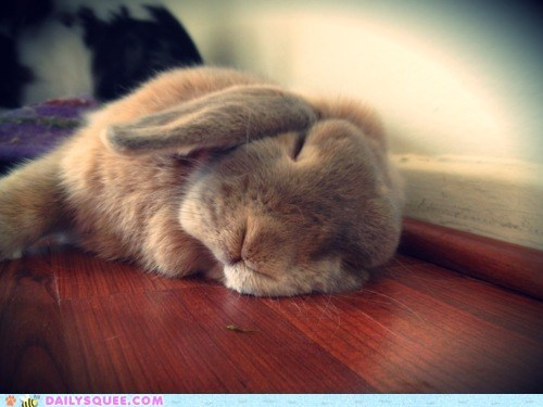 abbit, bunny, cute, sleep, sleepy