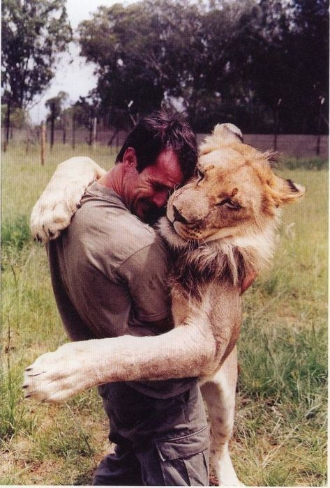 adorable, amazing, cute, friendship, lion, love, man, savannah