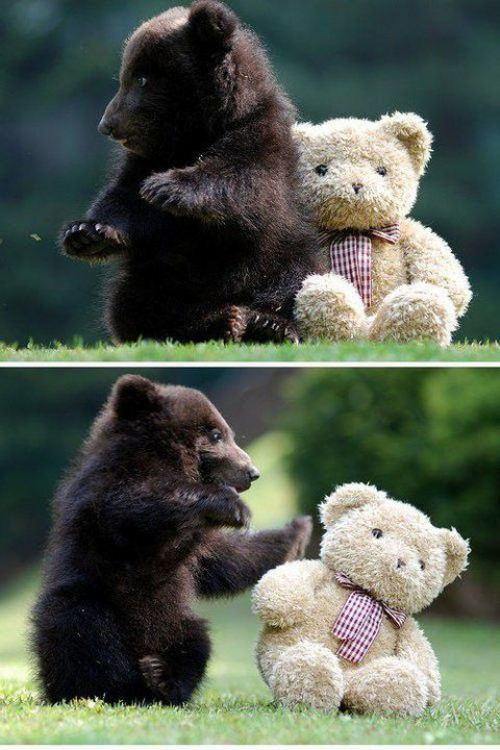 adorable, bear, bowtie, cub, cute, teddy bear