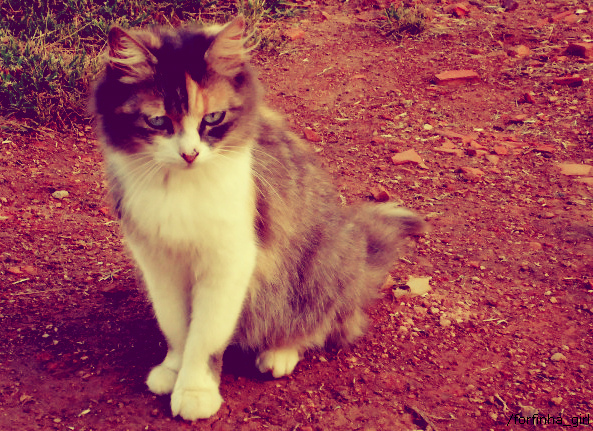 animal, cat, cute, gata, gatos, vintage