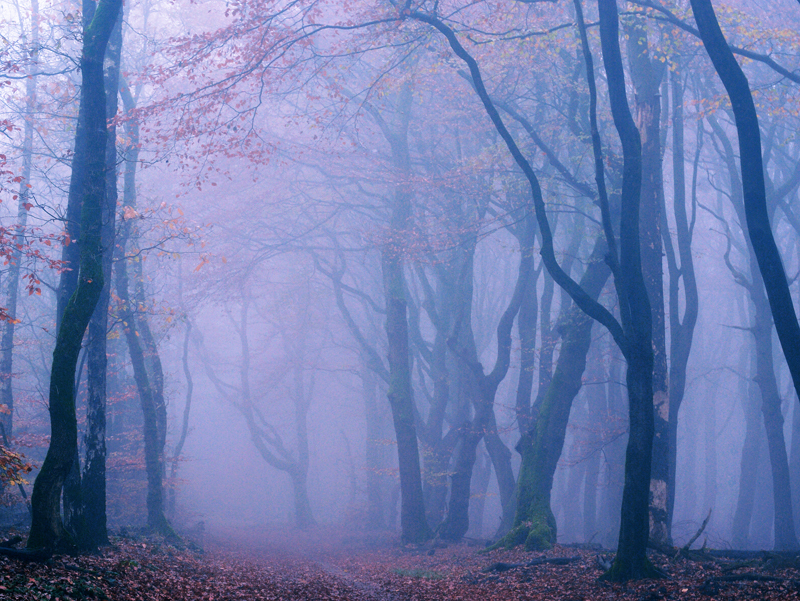 animals plants & nature, blue, deviantart, fog, forest