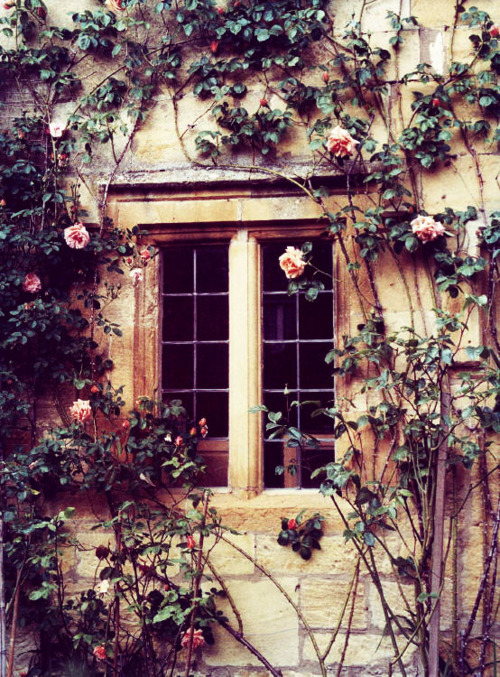 architectural detail, climbing rose, exterior, rose bush, roses, window