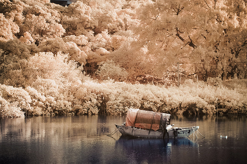 asia, beautiful, blue beauty, boat, cherry blossom, cute, gold, pretty, river, white
