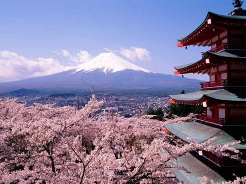asia, castle, flower, flowers, japan, mountain, mtfuji, nature, pink, pretty, sakura, shrine, temple, tokyo, tree, trees