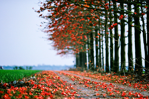 autumn, beautiful, nature, photography, red