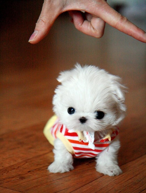 Baby Cute Dog And Puppy Image 267428 On Favim Com