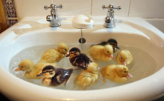 bath time, ducks, sink, soap, water