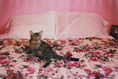 beautiful bed bedroom cat colors cute floral floral print