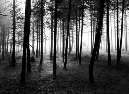 beautiful, black and white, dark, nature, photography, trees