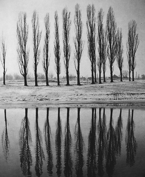 beautiful, black and white, florest, photography, trees