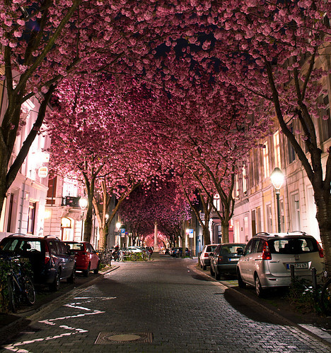 beautiful, cars, love, pink, town, trees
