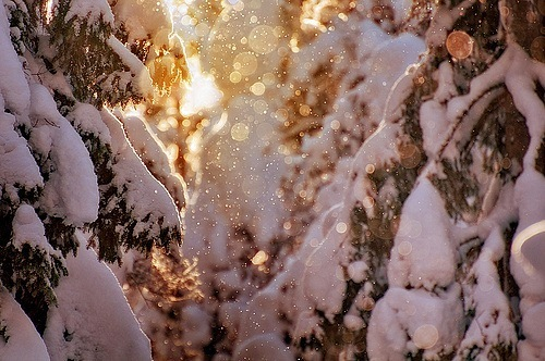 beautiful, christmas, cold, color, colorful, colors, december, landscape, nature, photography, pretty, snow, snowing, sun, sunset, sunshine, winter