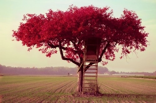 beautiful, cute, nature, pretty, red