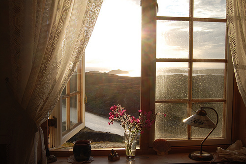 beautiful view, flowers, nature, view, window