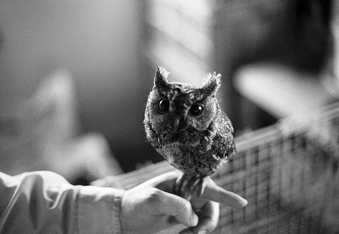 black and white, cute, owl, photography