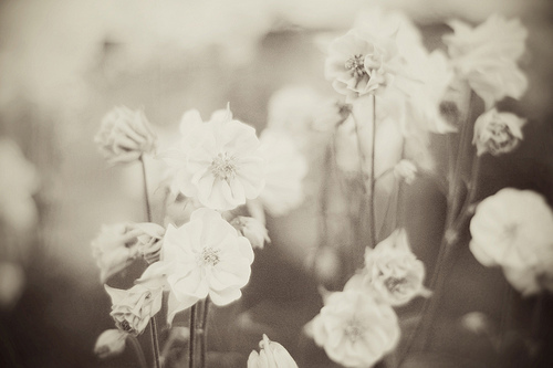black and white, flowers, photography, rustic