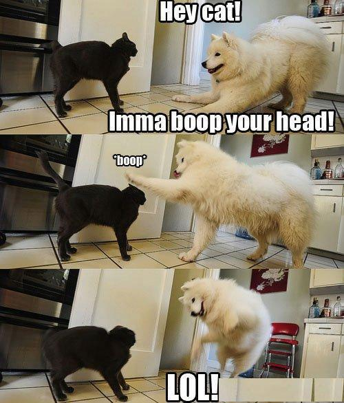 black, cat, dog, doggie, funny, jump, kitty, lol, mean, silly, white
