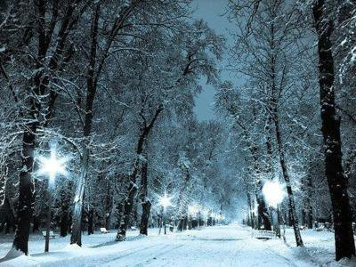 blue, light, nature, night, park, romance, snow, trails, trees, white, winter