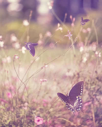 butterfly, cute, freedom