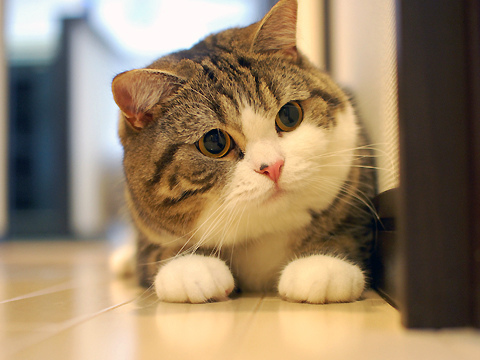 cat-cute-maru-Favim.com-268776.jpg