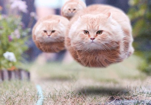 cats, floating, funny, photography, weird
