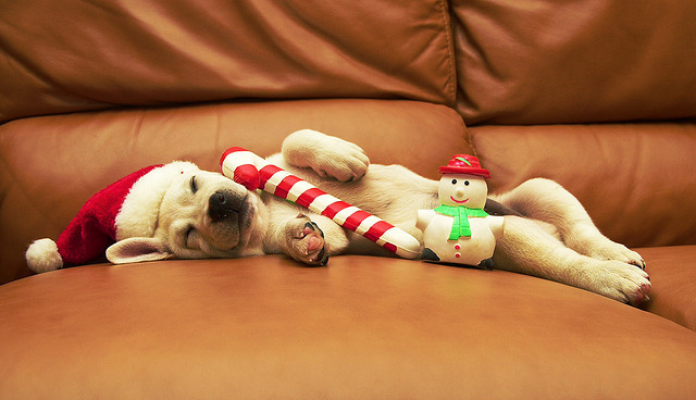 christmas, cute, dog, puppy, sleep
