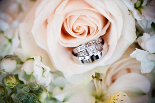 flower, rings, wedding