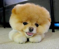 *--*, animal, beautiful, boy, cool, cute, dog, fashion, fashion girl, fluffy, fun, girl, lindo, love, onwt, peludo, photo, photography, so cute