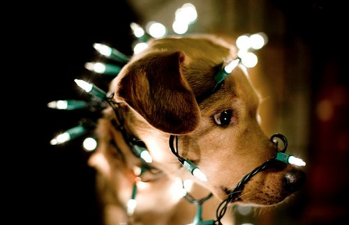 adorable, animal, awn, christmas, cute
