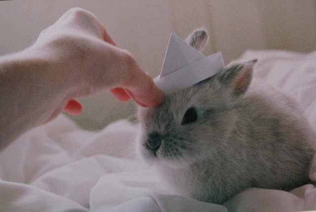adorable, bunny, cute, indie, rabbit