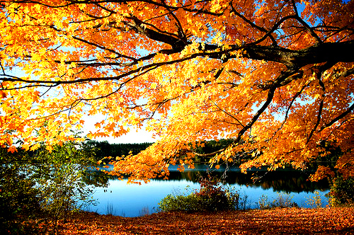 amazing, autumn, awesome, beautiful, darling, epic, fall, lovely, nature, orange, photography, pretty, seasons, stunning, tree, water, yellow