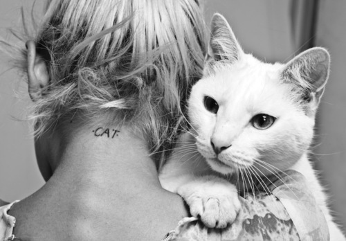 amazing, beautiful, beauty, blonde, cat