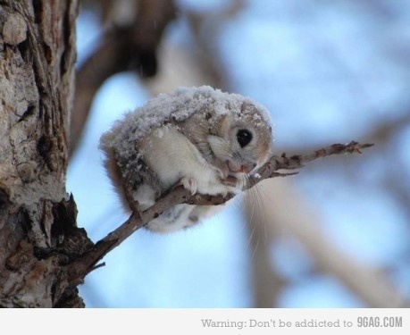 &amp;lt;3, adorable, animal, cold, cute