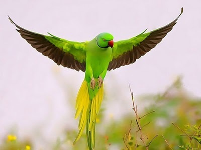 animal, animales, animals, beautiful, bird, colour, cute, green, macaws, natural, photography
