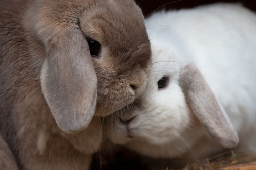 animal, animals, pretty, puppy, rabbit