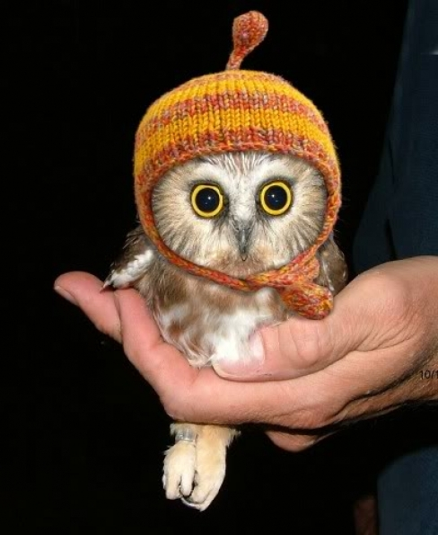 animal, baby, cute, fall, hat, orange, owl, winter, yellow
