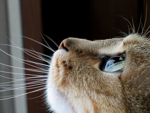 animal, beautiful, cat, cats, cute, eye, eyes, photography, pretty