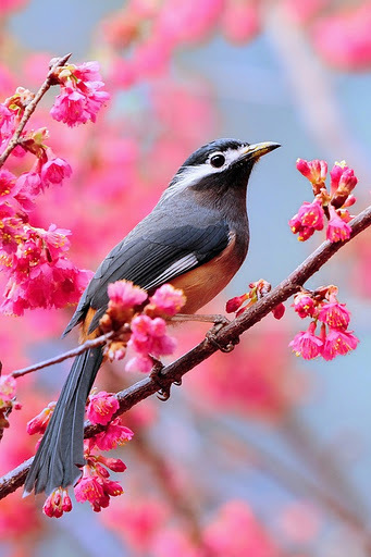 animal, bird, branch, cute, pink