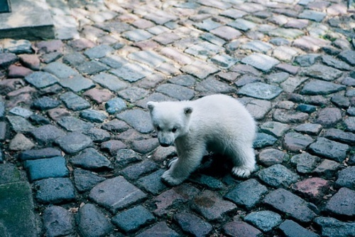 animals, baby, cobbles, cute, pavement