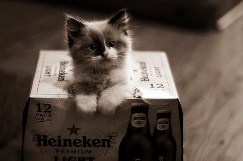 animals, black and white, cat, cute, heineken, kitty