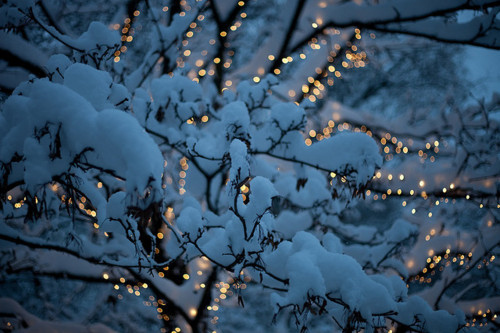 art, blur, light, lights, magic, photo, snow, trees, winter