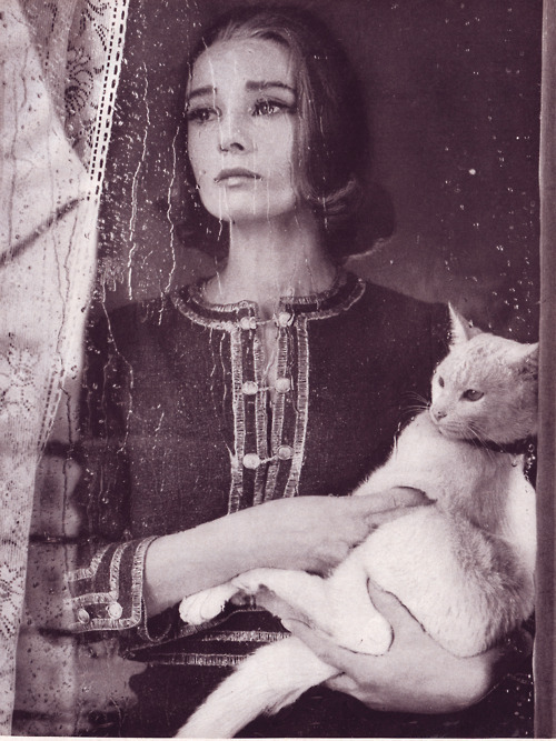 audrey hepburn, black and white, cat, classic, movie, vintage